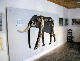 Tilos - Exhibition of dwarf elephants